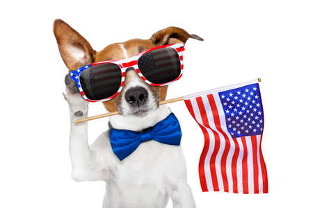 Jack russell chien célébrant la fête de l'indépendance 4 juillet avec drapeau usa dans la bouche, écoute avec oreille, isolé sur fond blanc Banque d'images - 80902778