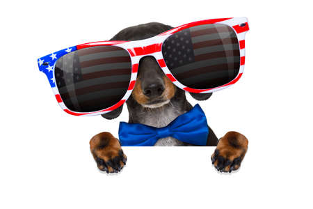 american hero: dachshund sausage dog wearing sunglasses of usa  on  independence day 4th of july, reflections on  glasses, isolated on white background Stock Photo