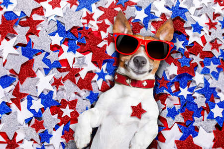american hero: jack russell dog on independence day 4th of july on a background of usa Stars , wearing funny sunglasses