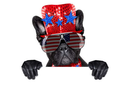 american hero: french bulldog dog celebrating  independence day 4th of july behind blank white banner  isolated on white background