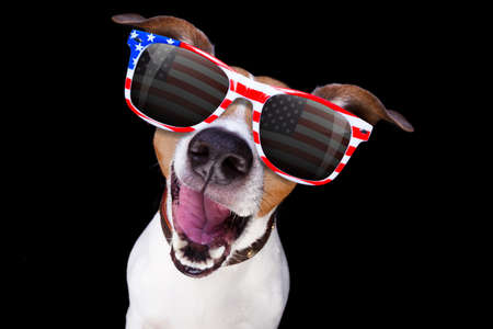 jack russell dog  shouting  4th of July  on independence day, isolated on black dark  background