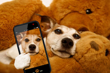 funny glasses: jack russell terrier dog resting  having  a siesta  on his bed with his teddy bear,   tired and sleepy, taking a selfie with smartphone or cell phone , telephone
