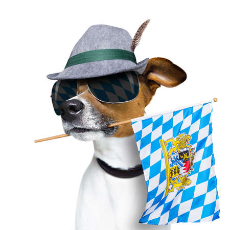 funny glasses: jack russell dog celebrating  beer festival in munich , bavaria germany holding flag in mouth , isolated on white background