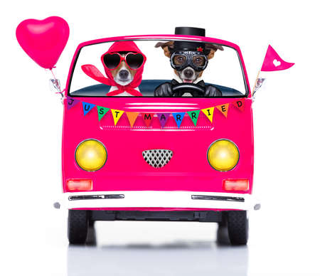bisexual women: couple of two dogs driving  a  pink car or van just married, on gay pride day or csd