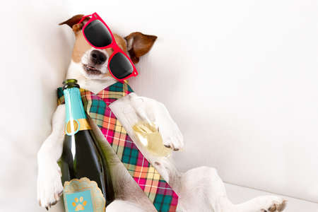 drunk jack russell terrier dog resting  or sleeping hangover with headache, with bottle and glass , wearing sunglasses and tie Stockfoto