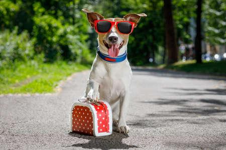Jack Russell Hund bereit für den Sommerurlaub Urlaub mit Gepäck oder eine Tasche