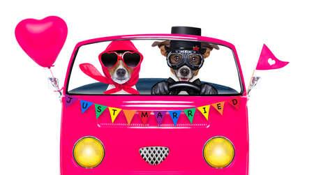 discriminacion: Pareja de dos perros conduciendo un coche rosa o furgoneta recién casados, el día del orgullo gay o csd