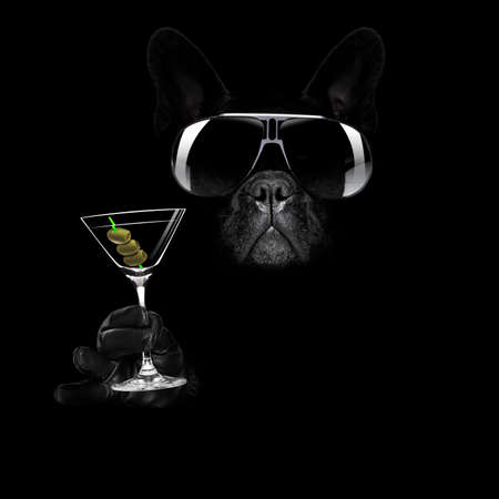 french bulldog in dark black  isolated background ,with martini cocktail drink  celebrating and toasting, looking cool