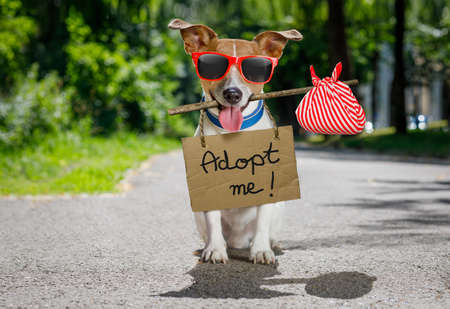 road of love: lost  and homeless  jack russell dog with cardboard hanging around neck, abandoned at the street, waiting to be adopted Stock Photo