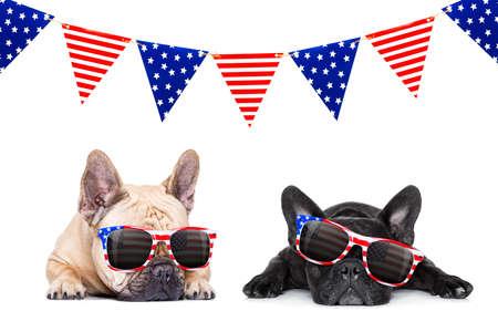 symbols: couple french bulldog dogs celebrating  independence day 4th of july with  sunglasses,  isolated on white background Stock Photo