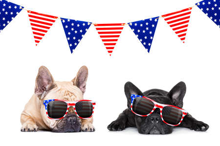 couple french bulldog dogs celebrating  independence day 4th of july with  sunglasses,  isolated on white background Stock Photo