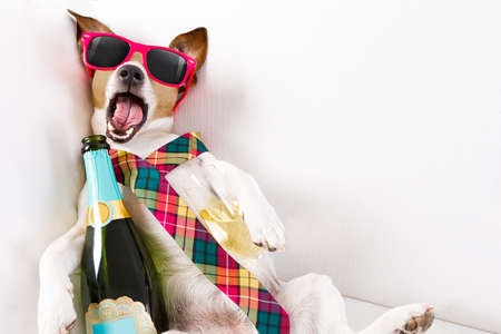 suffering: drunk jack russell terrier dog resting  or sleeping hangover with headache, with bottle and glass , wearing sunglasses and tie Stock Photo