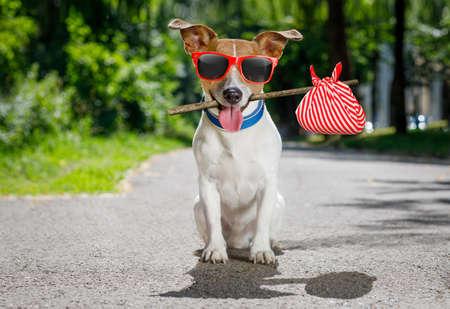 soledad: Perdidos y desamparados jack russell perro abandonado en la calle a la espera de ser adoptado