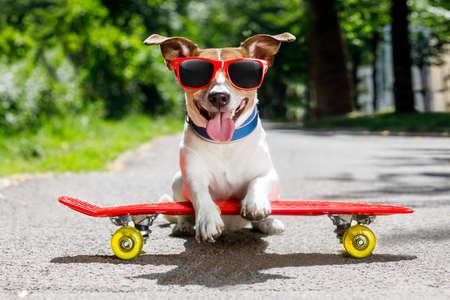 Jack Russell Terrier hond rijden een skateboard als schaatser, met zonnebril in de zomervakantie