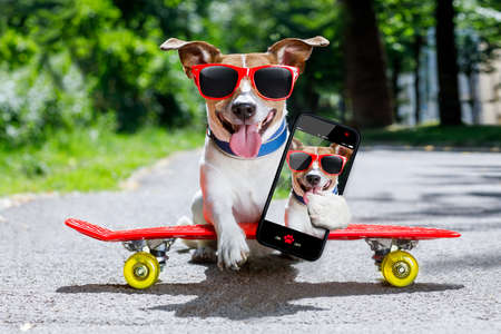 skateboarder: jack russell terrier dog  riding very fast with speed a skateboard as skater , with sunglasses in summer vacation, taking a selfie with smartphone or cell phone