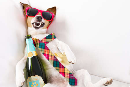 drunk jack russell terrier dog resting  or sleeping hangover with headache, with bottle and glass , wearing sunglasses and tie Foto de archivo