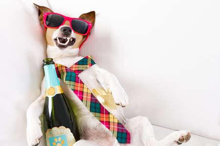 Pijany pies russell terrier spoczywający lub spania kacenjobed z bólem głowy, z butelką i szkłem, noszenie okularów przeciwsłonecznych i krawat