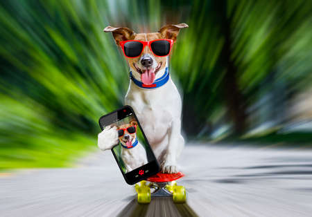 jack russell terrier dog  riding very fast with speed a skateboard as skater , with sunglasses in summer vacation, taking a selfie with smartphone or cell phone