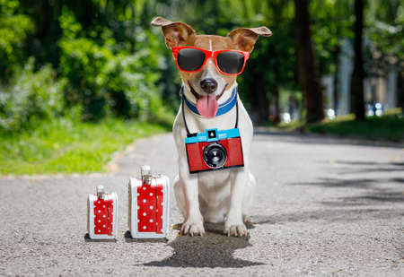 funny glasses: jack russell dog ready for summer holidays vacation with luggage or bags