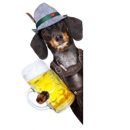 octoberfest: Dachshund bavarian o perro de salchicha con pan de jengibre y taza aislada sobre fondo blanco, tostado para el festival de celebración de cerveza en munich