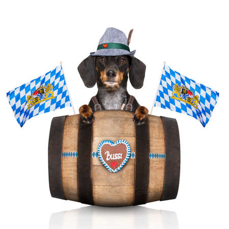 bavarian dachshund or sausage  dog with  gingerbread and  barrel   isolated on white background , ready for the beer celebration festival in munich, Stock Photo