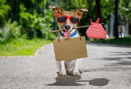 soledad: perro perdido y sin hogar jack russell con cartón colgando del cuello, abandonado en la calle, esperando ser adoptado Foto de archivo