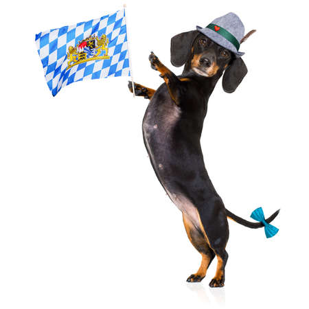 pretzel: bavarian dachshund or sausage  dog  isolated on white background , toasting for the beer celebration festival in munich Stock Photo