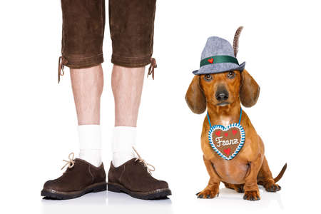 pretzel: bavarian dachshund or sausage  dog with  gingerbread with owner  isolated on white background , ready for the beer celebration festival in munich