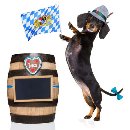 pretzel: bavarian dachshund or sausage  dog with  gingerbread and  barrel   isolated on white background , ready for the beer celebration festival in munich, Stock Photo