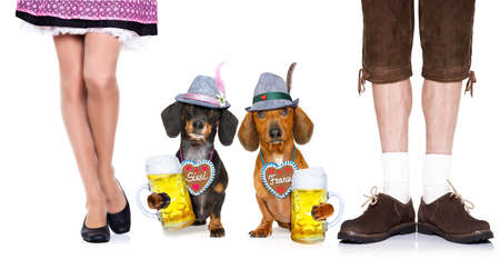 bavarian dachshund or sausage  dogs couple with  gingerbread with owner and beer mugs isolated on white background , ready for the beer celebration festival in munich, Stock Photo