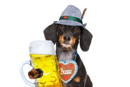 bavarian dachshund or sausage  dog with  gingerbread and  mug  isolated on white background , toasting for the beer celebration festival in munich Stok Fotoğraf - 83186831