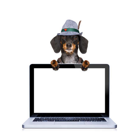 pretzel: bavarian dachshund or sausage  dog behind pc laptop computer laptop screen , ready for the beer celebration festival in munich Stock Photo