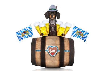 funny glasses: bavarian dachshund or sausage  dog with  gingerbread and  barrel   isolated on white background , ready for the beer celebration festival in munich, Stock Photo