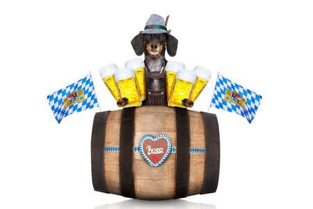 octoberfest: Dachshund bavarian o perro de la salchicha con el pan de jengibre y el barril aislados en el fondo blanco, listo para el festival de la celebración de la cerveza en Munich,