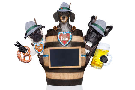 bavarian   couple or group  of dogs behind a beer barrel toasting with beer mugs