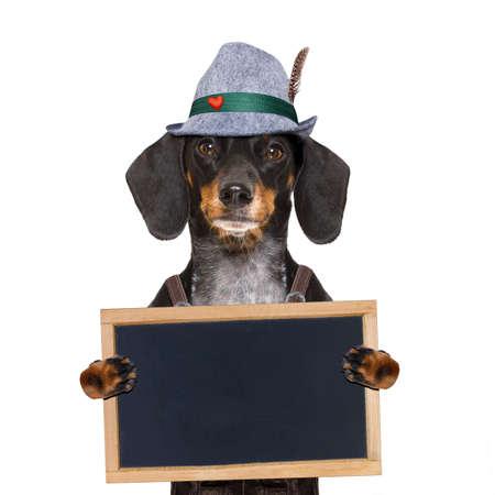 octoberfest: Dachshund bavarian o perro de la salchicha con el pan de jengibre y la taza aislados en el fondo blanco, listo para el festival de la celebración de la cerveza en Munich,