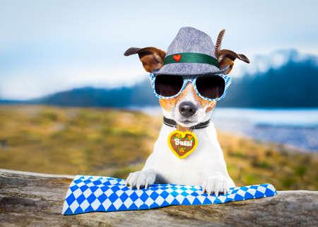octoberfest: bavarian jack russell perro al aire libre por el río y las montañas, listo para la fiesta de la cerveza festival de celebración en munich