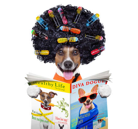 mode: afro look dog with very big curly black hair , or wig  wearing orange hairdressers towel , isolated on white background reading a magazine or newspaper