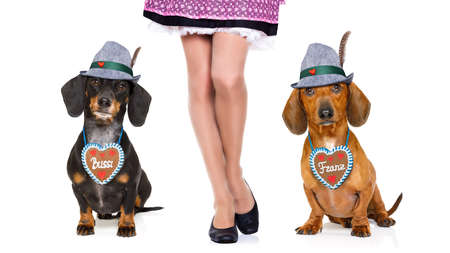 funny glasses: bavarian dachshund or sausage  dogs couple with  gingerbread with owner  isolated on white background , ready for the beer celebration festival in munich,