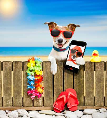 jack russel dog resting and relaxing on a wall or fence at the  beach  ocean shore, on summer vacation holidays, wearing sunglasses, taking  a selfie with smartphone or mobile phone Stock Photo