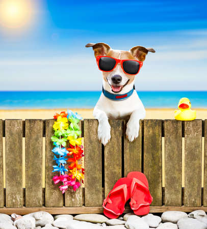 animal shadow: jack russel dog resting and relaxing on a wall or fence at the  beach  ocean shore, on summer vacation holidays, wearing sunglasses Stock Photo