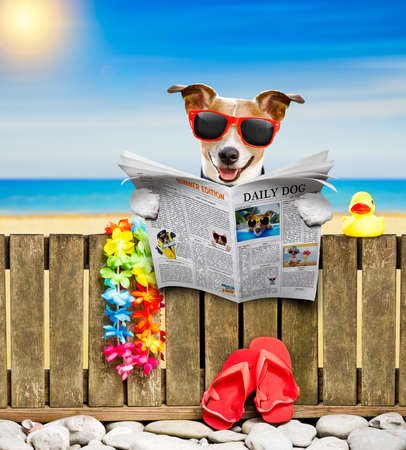 jack russel dog resting and relaxing on a wall or fence at the  beach  ocean shore, on summer vacation holidays, reading a magazine or newspaper Stock Photo
