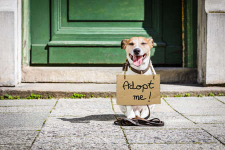 lost  and homeless  jack russell dog with cardboard hanging around neck, abandoned at the street, waiting to be adopted at the door home