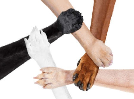 five paws like   in  a multicultural team  circle shaking hands united for the same cause and goal, isolated on white background