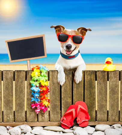 jack russel dog resting and relaxing on a wall or fence at the  beach  ocean shore, on summer vacation holidays, wearing sunglasses, empty banner and placard to the side