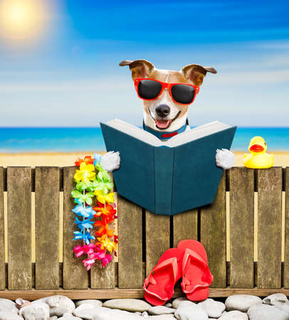 jack russel dog resting and relaxing on a wall or fence at the  beach  ocean shore, on summer vacation holidays, reading a book