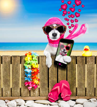 Terrier Hund Ruhe und Entspannung an einer Wand oder Zaun am Strand Ozean Ufer, auf Sommerferien Urlaub, Sonnenbrille tragen, ein Selfie mit Smartphone oder Handy