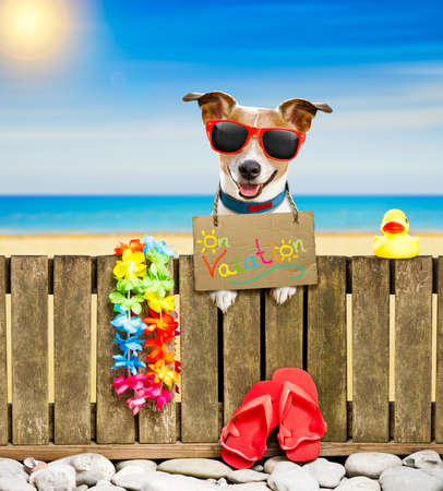 jack russel dog resting and relaxing on a wall or fence at the  beach  ocean shore, on summer vacation holidays, wearing sunglasses, with  cardboard, with  cardboard Stock Photo