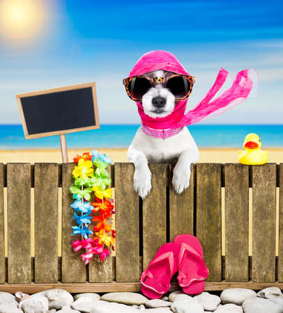 terrier dog resting and relaxing on a wall or fence at the  beach  ocean shore, on summer vacation holidays, wearing sunglasses, empty banner and placard to the side