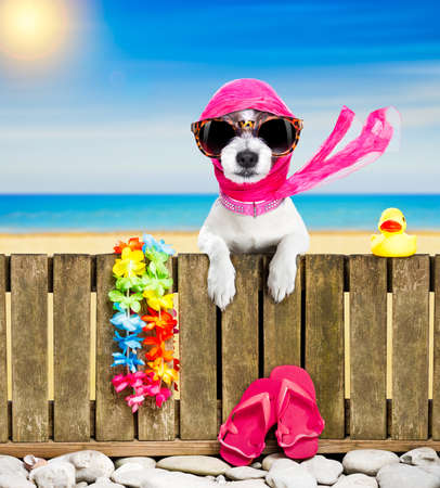 terrier dog resting and relaxing on a wall or fence at the  beach  ocean shore, on summer vacation holidays, wearing sunglasses